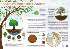 Die Lebensleistung eines Baumes
