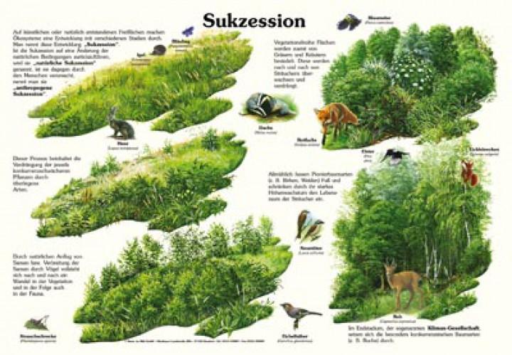 Sukzession 50x70 Amp 70x100 Cm Pflanzen Lehrtafeln