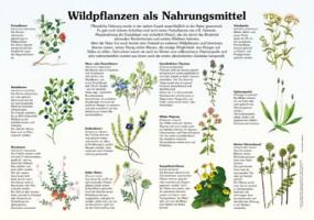 Wildpflanzen als Nahrungsmittel
