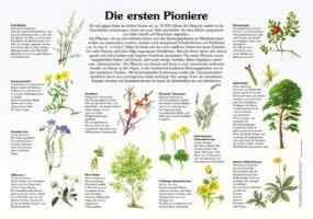 Die ersten Pioniere