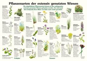 Pflanzenarten der extensiv genutzten Wiesen