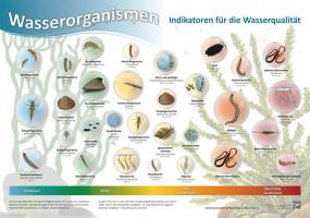Wasserorganismen