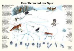Den Tieren auf der Spur