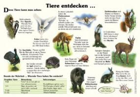 Tiere entdecken