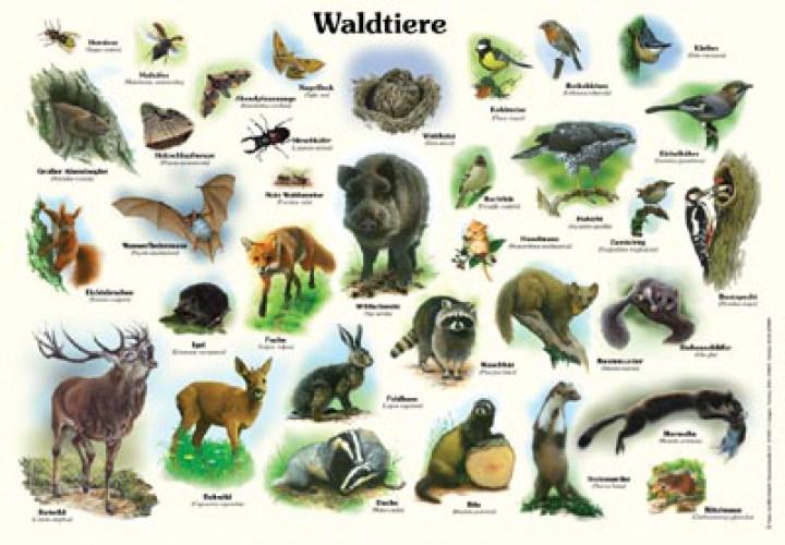 waldtiere