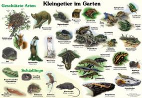 Kleingetier im Garten