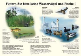 Füttern Sie bitte keine Wasservögel und Fische!