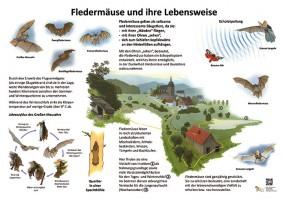 Fledermäuse und ihre Lebensweise