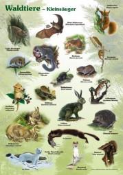 Waldtiere - Kleinsäuger