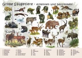 Große Säugetiere - erkennen und bestimmen