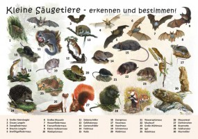 Kleine Säugetiere - erkennen und bestimmen