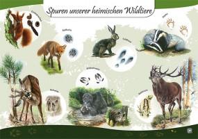 Spuren unserer heimischen Wildtiere