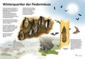 Winterquartiere der Fledermäuse