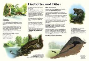 Fischotter und Biber