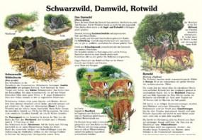 Schwarzwild, Damwild, Rotwild