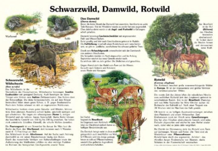 schwarzwild damwild rotwild 50x70 70x100 cm. Black Bedroom Furniture Sets. Home Design Ideas