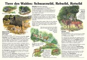 Tiere des Waldes: Schwarzwild, Rehwild, Rotwild