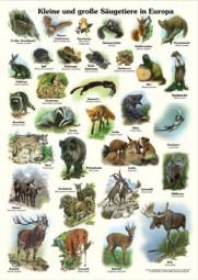 Kleine und große Säugetiere in Europa