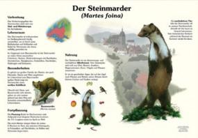 Der Steinmarder