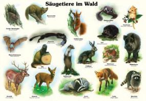Säugetiere im Wald