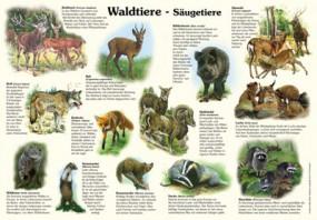 Waldtiere - Säugetiere