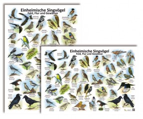 Einheimische Singvögel - Feld, Flur und Gewässer