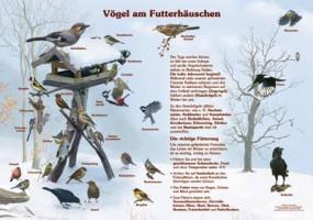 Vögel am Futterhäuschen