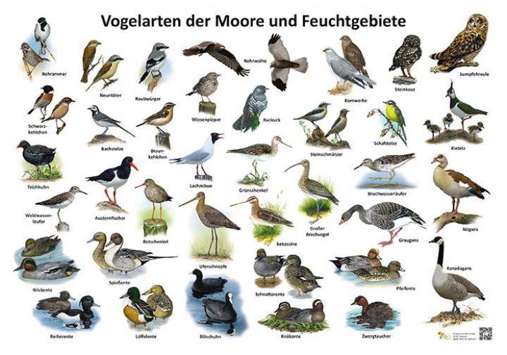 vogelarten der moore und feuchtgebiete natur im bild