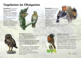 Vogelarten im Obstgarten