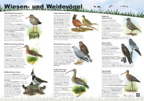 Wiesen- und Weidevögel