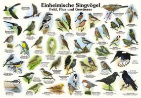 Einheimische Singvögel in Feld, Flur und Gewässer