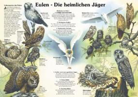 Eulen - Die heimlichen Jäger