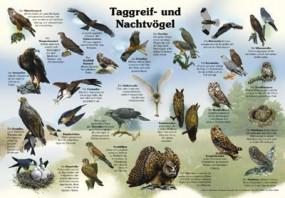 Taggreif- und Nachtvögel