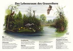 Der Lebensraum des Graureihers