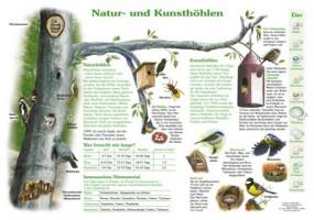 Natur- und Kunsthöhlen
