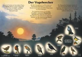 Der Vogelwecker