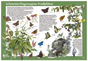 Schmetterlingsraupen-Fraßplätze