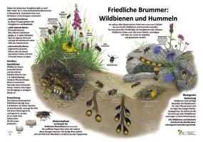 Friedliche Brummer - Wildbienen und Hummeln