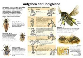 Die Aufgaben der Honigbiene