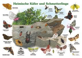 Heimische Käfer und Schmetterlinge