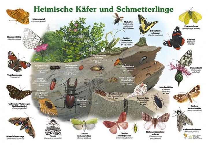 Heimische K 228 Fer Und Schmetterlinge 50x70 Amp 70x100 Cm