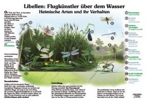 Libellen - Flugkünstler über dem Wasser