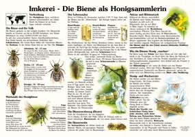 Imkerei - Die Biene als Honigsammlerin