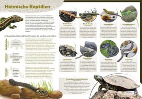 Heimische Reptilien