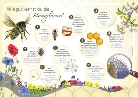 Wie gut kennst du die Honigbiene?