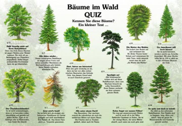 B 228 Ume Im Wald Quiz Natur Im Bild Lehrtafeln F 252 R Natur