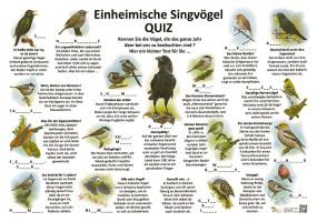Einheimische Singvögel Wald und Park-Quiz