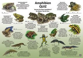 Amphibien-Quiz