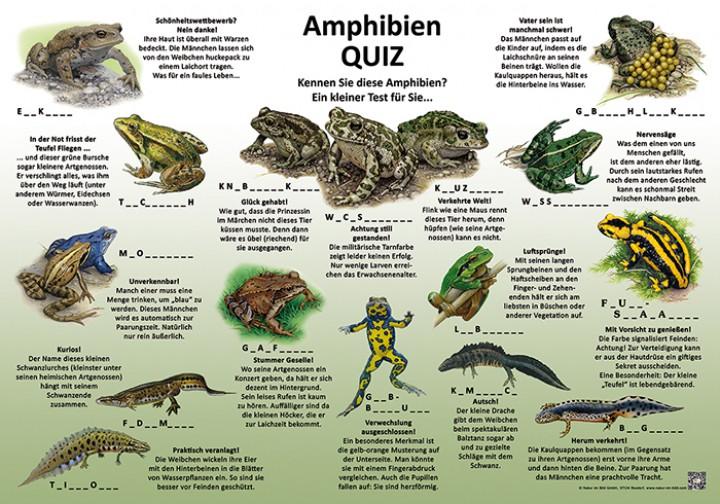 Amphibien Quiz 50x70 Amp 70x100 Cm Quiztafel