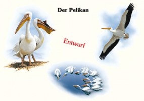 Der Pelikan